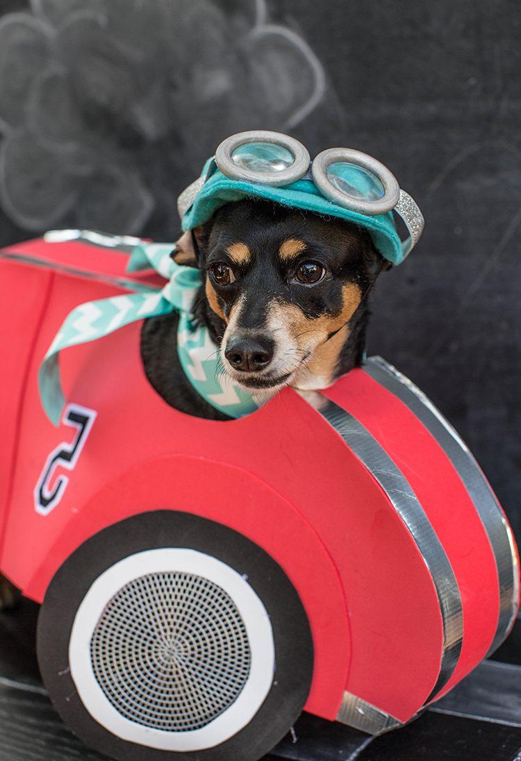 Halloween Kostüme selbstgemacht für meinen Hund: tolle Ideen zum Nachmachen