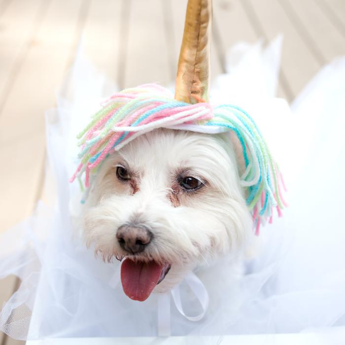 Ein Kostüm bunt und lustig für Tiere selber machen