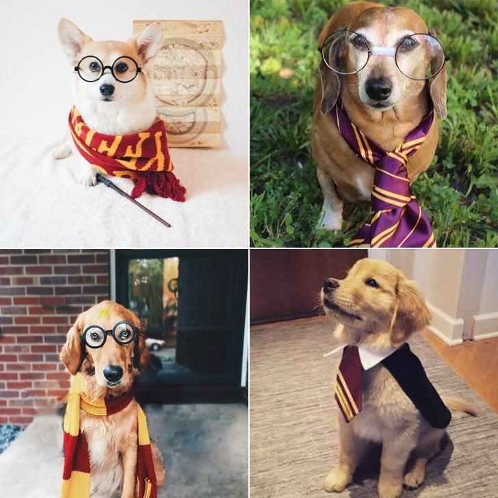Halloween Kostüme selbstgemacht für Tiere: Harry Potter