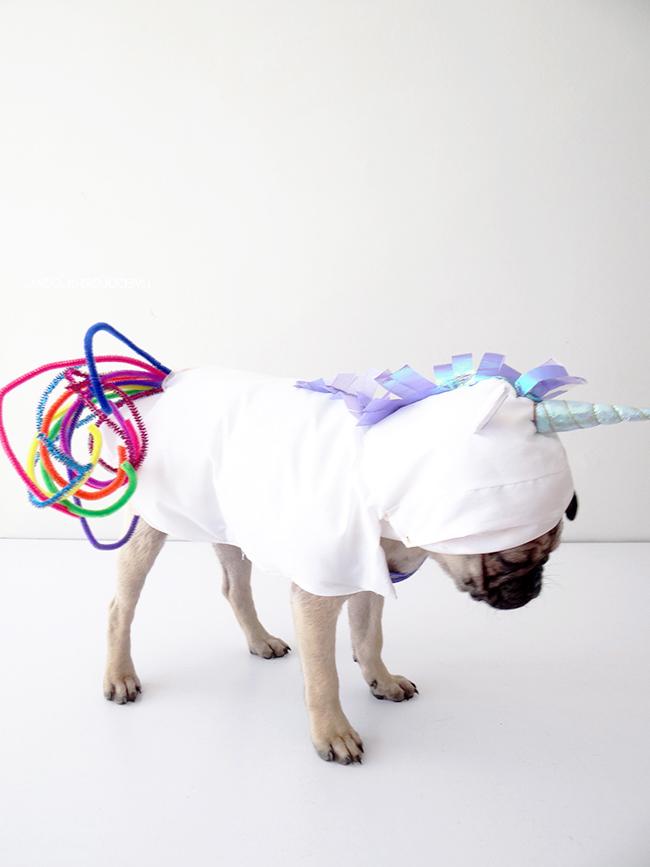 Einhorn Kostüm für Hund selber machen: der endgültige Look