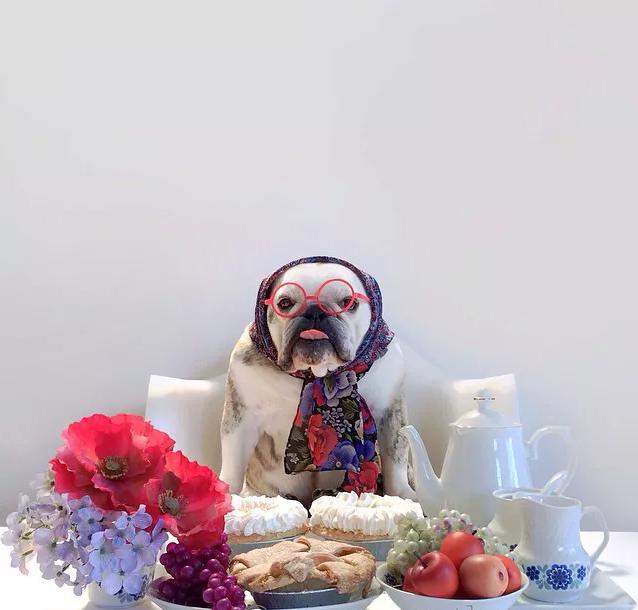 Halloween Kostüme selbstgemacht für meinen Hund: 30 Ideen zum Nachmachen