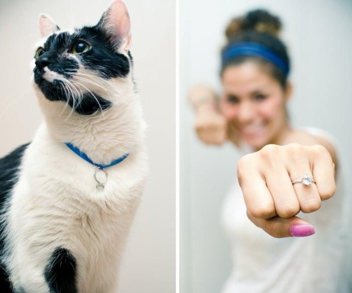 Hochzeitsantrag Ring Haustier Katze