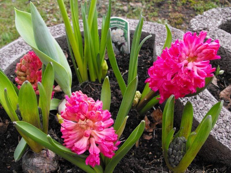 Pflanzsteine bepflanzen: Welche Pflanzen eignen sich dafür?