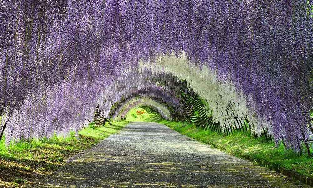 Japan Rundreise: Hinweise für eine Reise nach Japan
