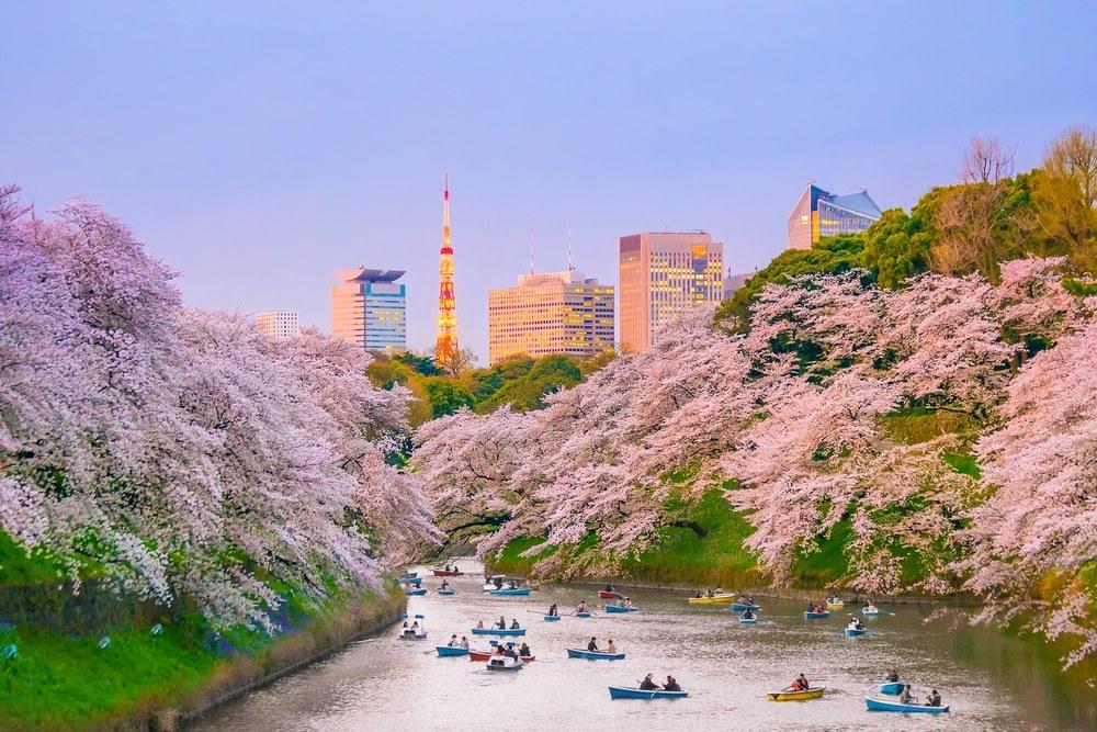 Japan Reise und die wunderschöne Kirschblüte