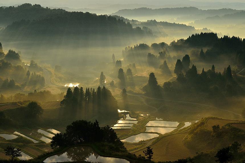 Während Ihrer Japan Rundreise besuchen Sie die Reisfelder
