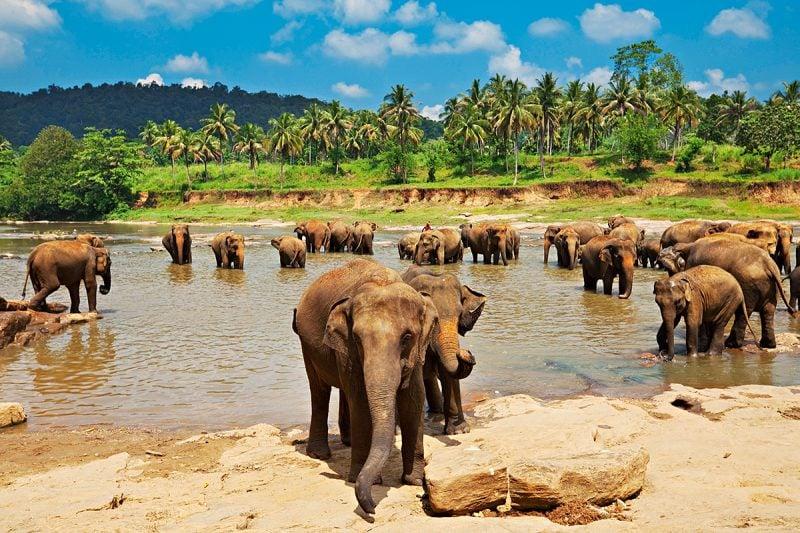 Die besten Urlaubsziele 2019: Safari in Sri Lanka