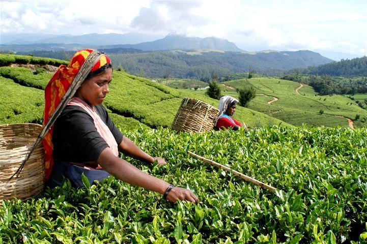 Günstige Urlaubsziele 2019: Sri Lanka Einwohner