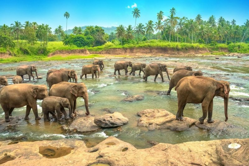 Günstige Urlaubsziele 2019: Elefanten in Sri Lanka