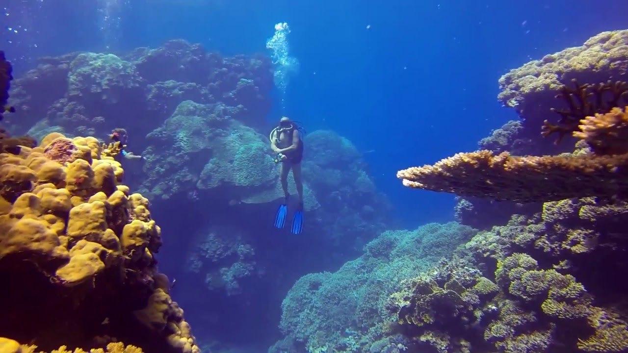 Ägypten Urlaub 2019: Tauchparadies