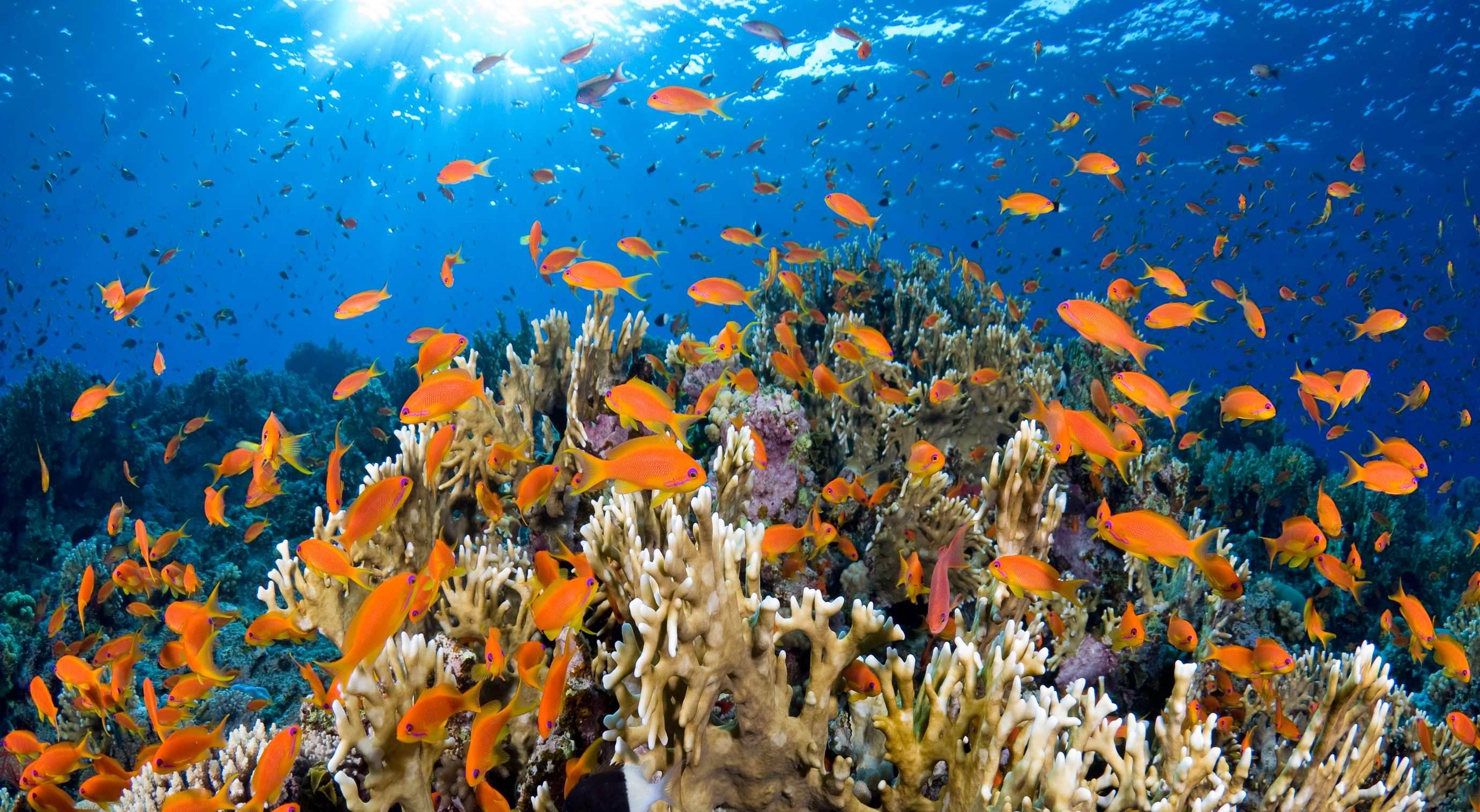 Urlaub in Ägypten und erkunden Sie einen des wunderschönsten Meeresbodens in Welt