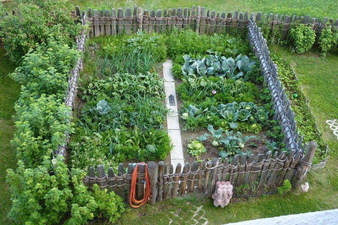 Gemüsegarten anlegen klein klare Ordnung schaffen
