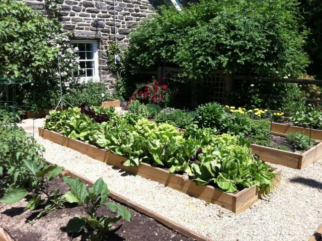 Gemüse anbauen Hochbeete