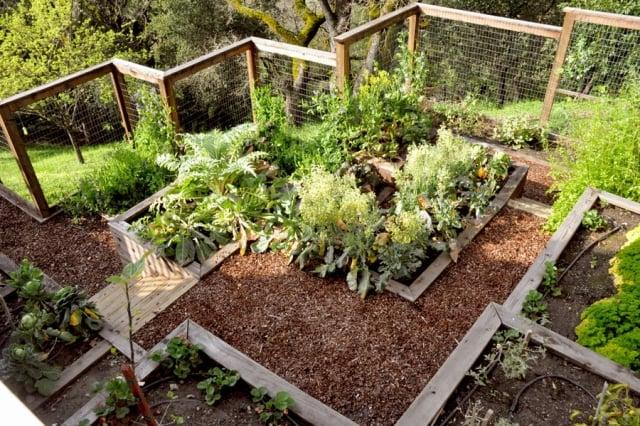 Gemüse anbauen Hochbeete Ordnung