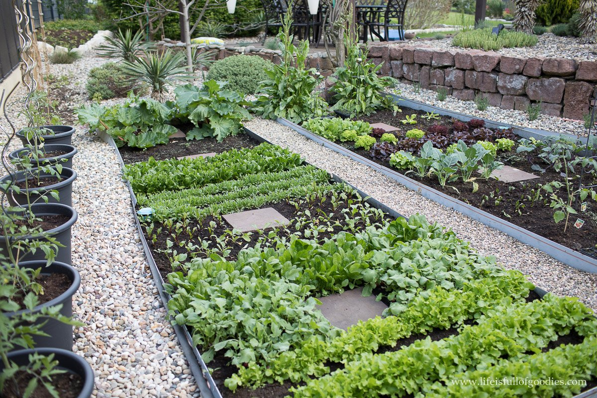 Gemüse anbauen Beete Gartenwege Kies