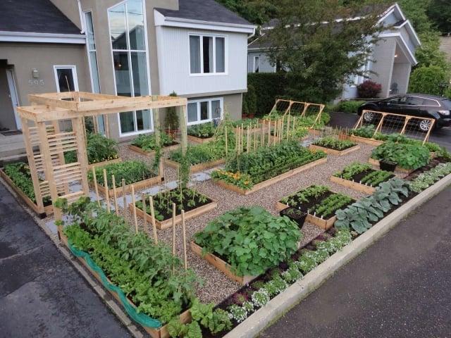 Gemüsegarten anlegen alles im Voraus planen