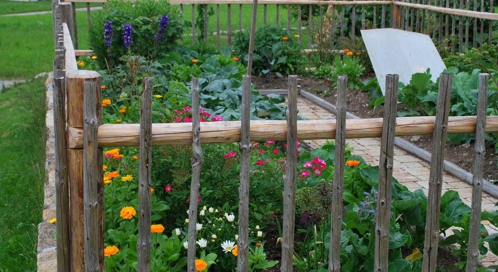 Gemüsegarten anlegen Blumen dekorativer Zaun
