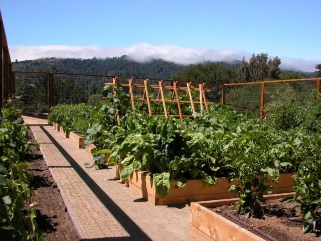 Gemüse anbauen in Hochbeeten herrlicher Look