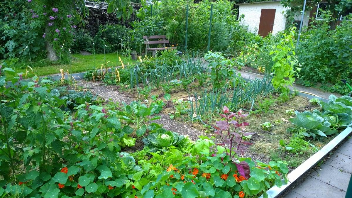Gemüse anbauen Abstand zwischen den Beeten