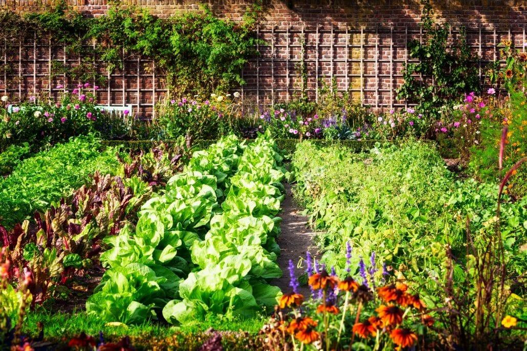 Gemüsegarten anlegen Grünsalat Kletterpflanzen