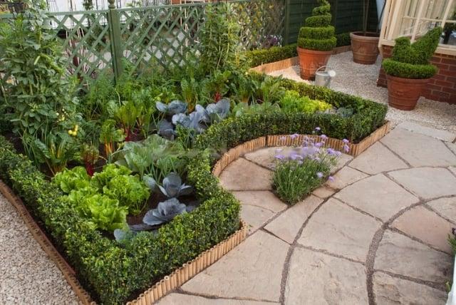 Gemüse anbauen Garten klein