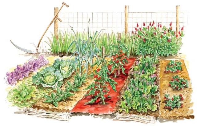 Gemüsegarten anlegen Pflanzen Zeichnung