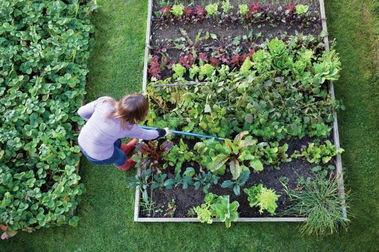 Gemüse anbauen und Pflegen