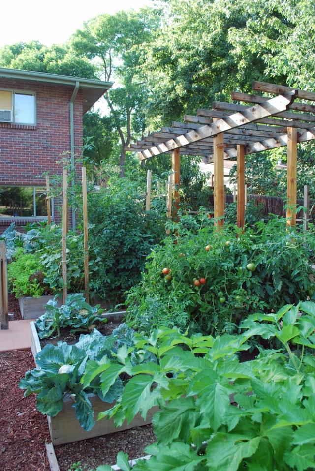 Gemüsegarten anlegen Tomaten anbauen