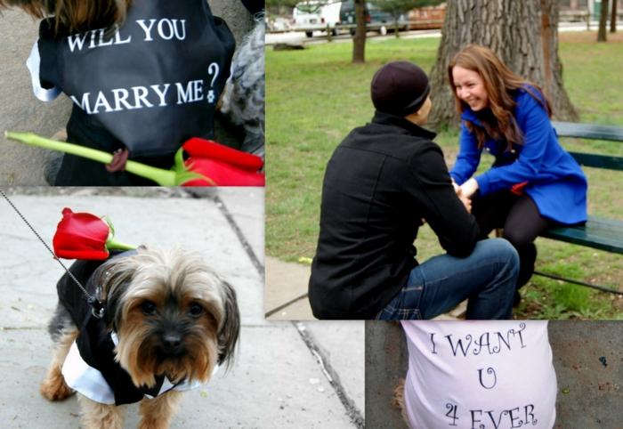 Heiratsantrag ungewähnlich Hund mit Rose