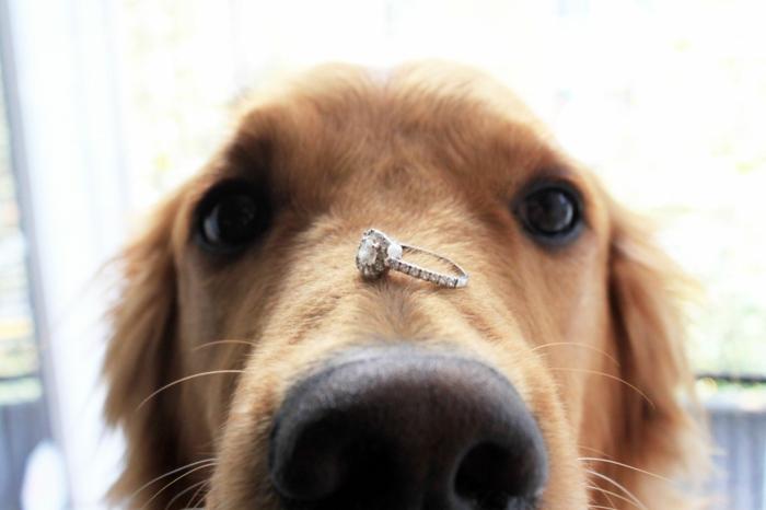 Heiratsantrag Haustier Hund Ring bringen