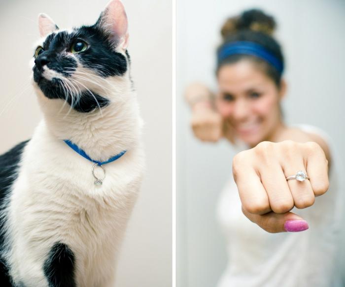 Heiratsantrag Haustier Katze