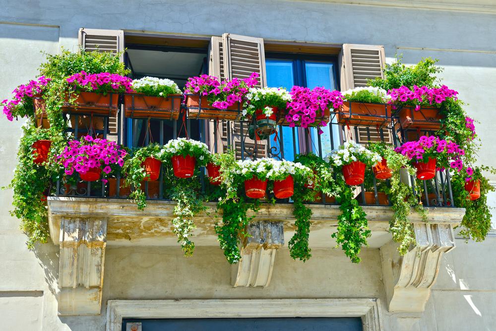 Balkonpflanzen Blumenpracht herrlicher Look