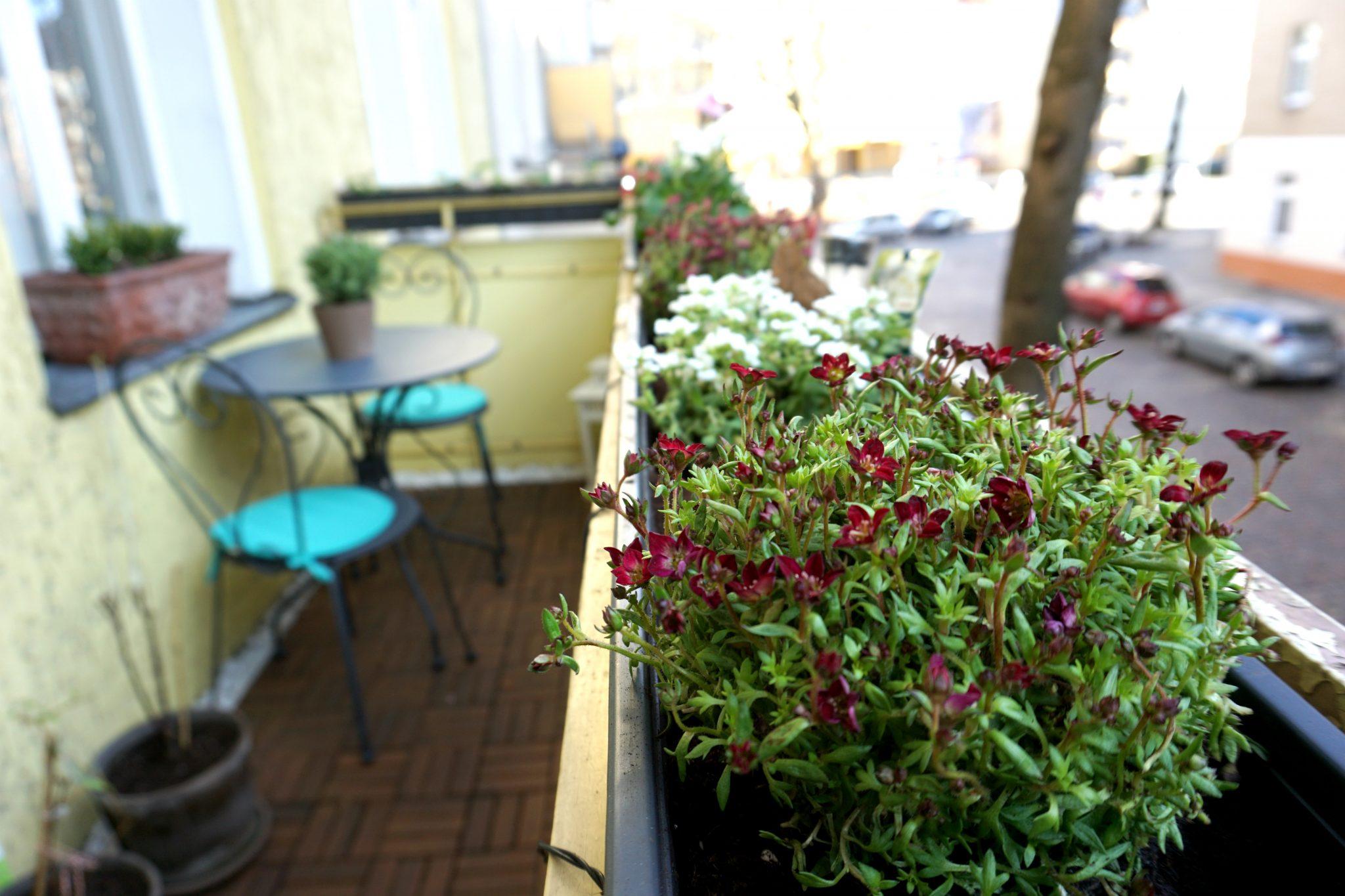 Balkonpflanzen Ideen und Vorschläge