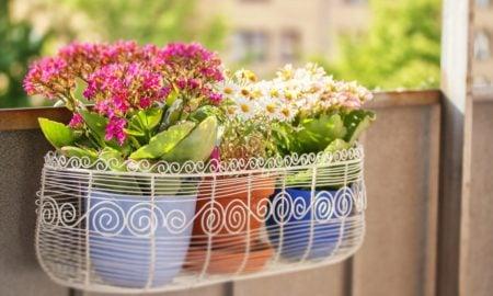 Balkonpflanzen auswählen