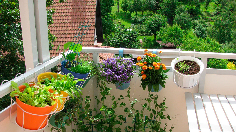 Balkonpflanzen blühend herrlicher Look