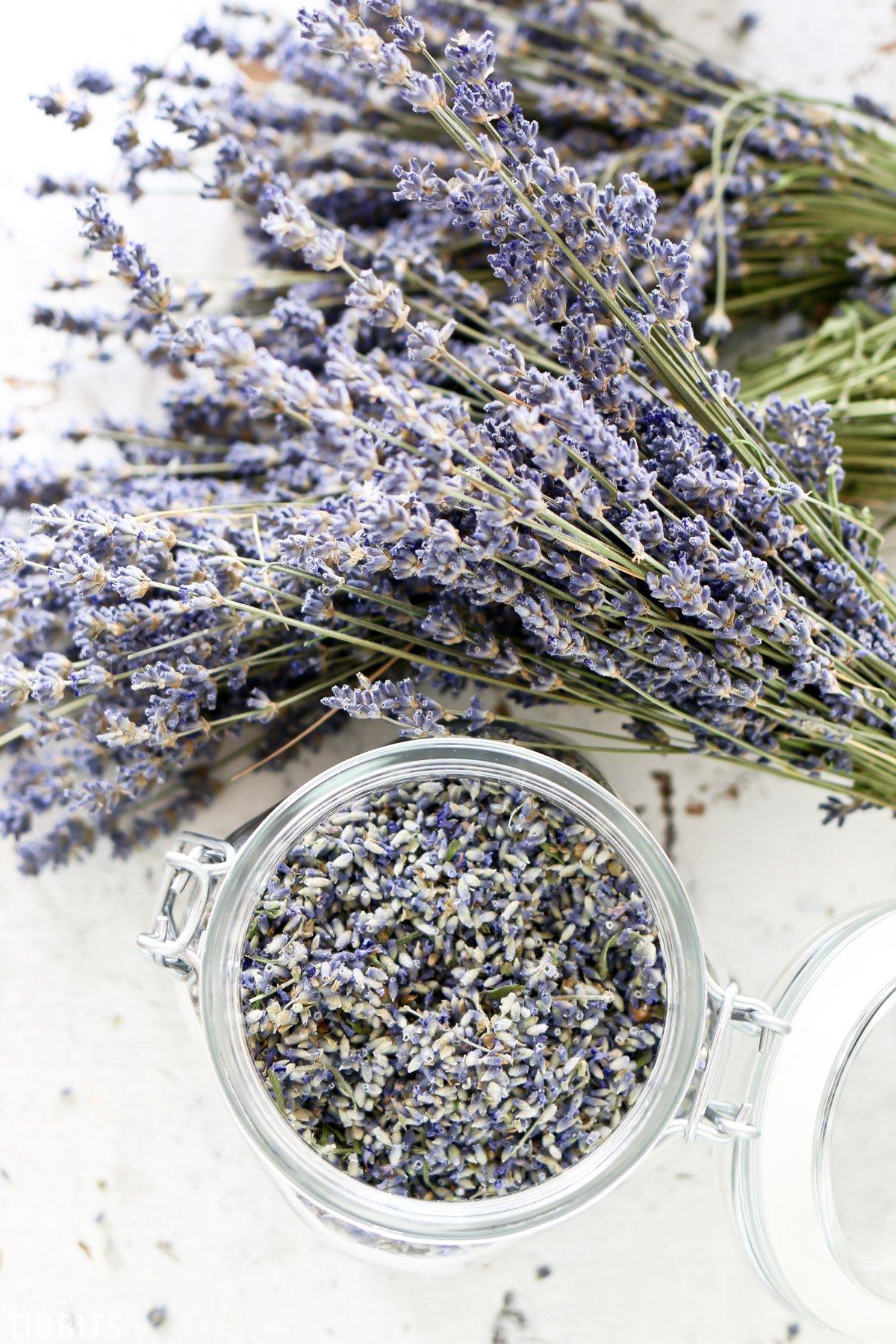 Wie können Sie selber eigenen Lavendel trocknen?