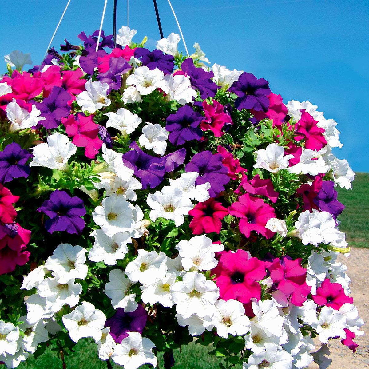 Penien Blumenpracht herrlicher Look