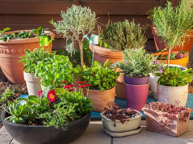 Pflanzen auswählen Balkon hilfreiche Tipps