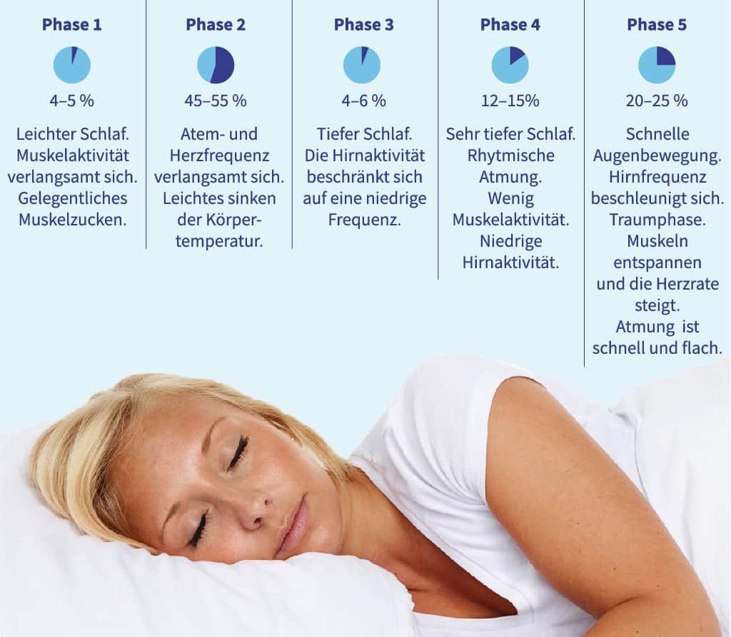 die Phasen des Schlafs