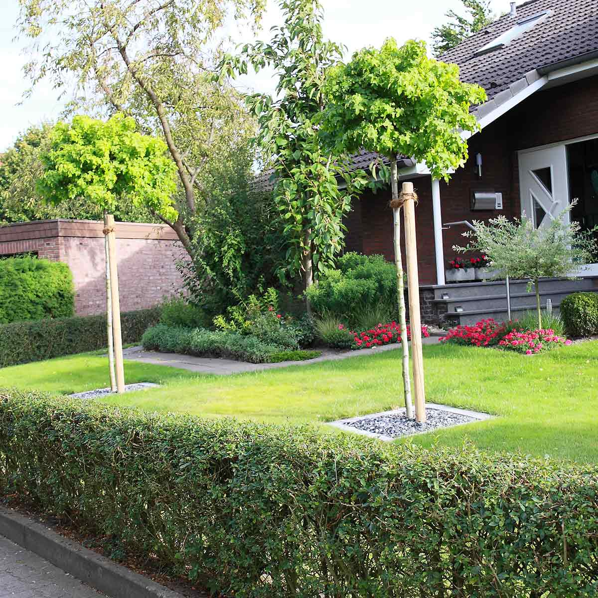 Vorgartengestaltung Rasenfläche Bäume Hecke
