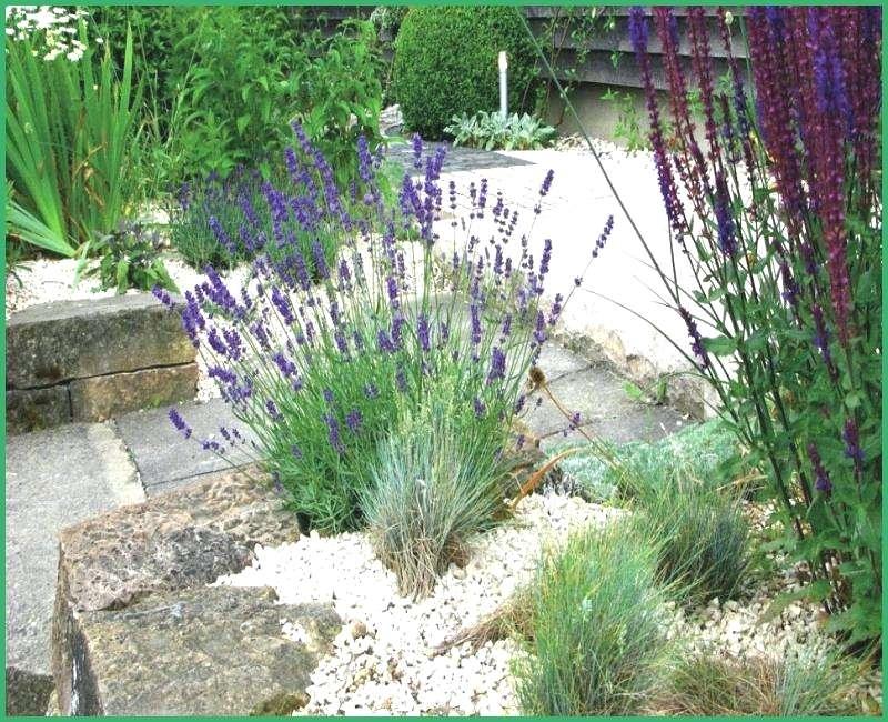 Vorgartengestaltung Pflanzen Lavandel