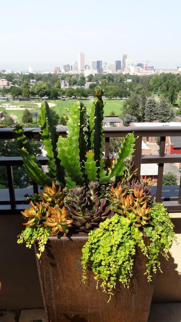 Garten gestalten exotische Pflanzen