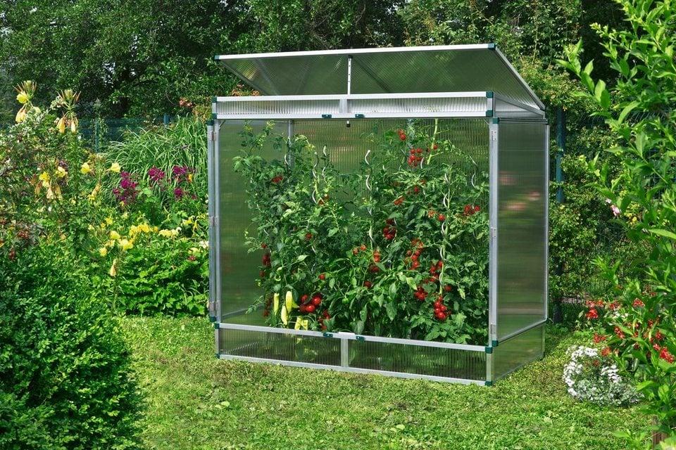 Mini-Treibhaus für Tomaten