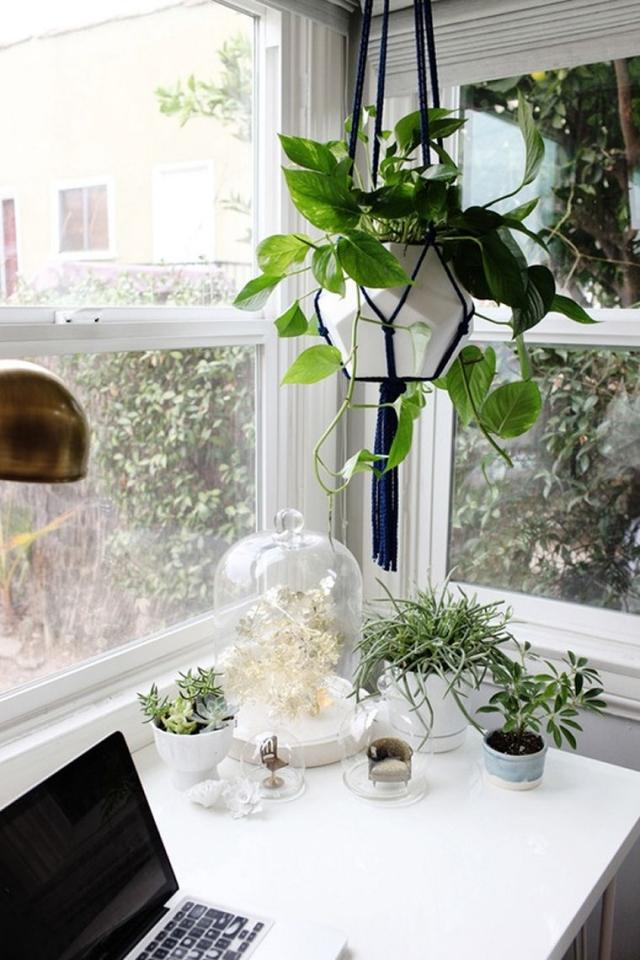 Blumentopf aufhängen Büro verschönern