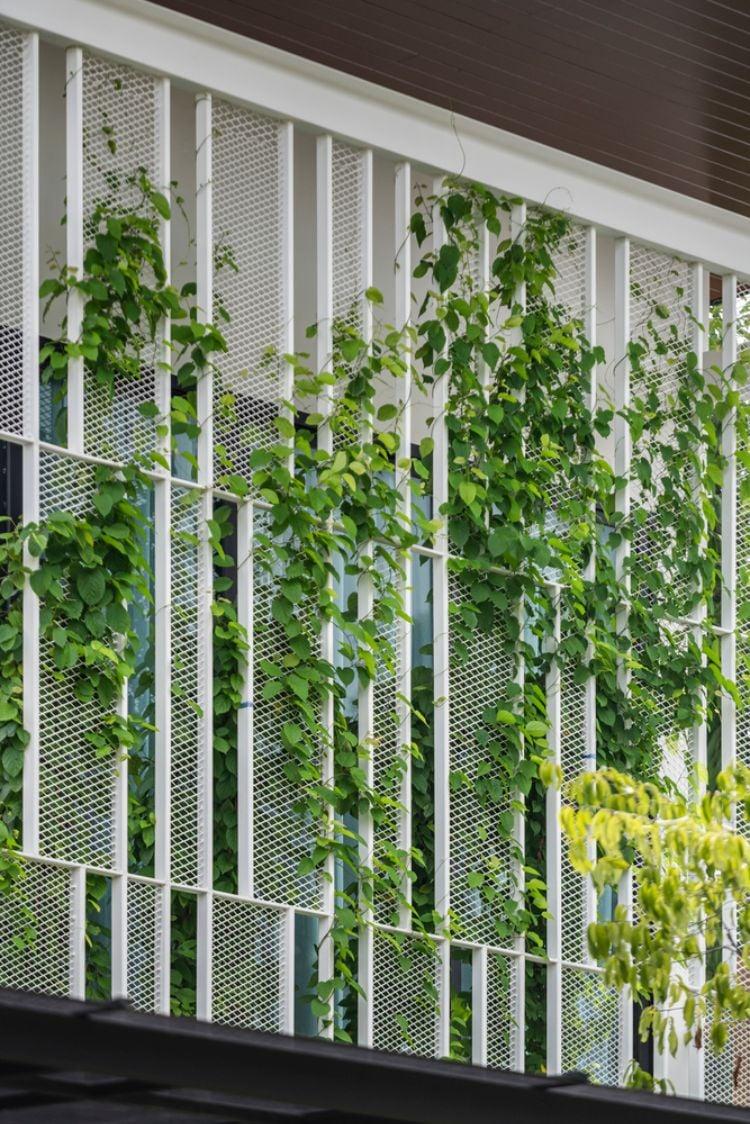 grüne Fassade geeignete Pflanzen Pflegetipps