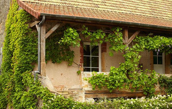Hausfassade begrünen echter Wein