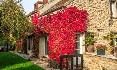 grüne Fassade wunderschöner Look Kletterpflanze