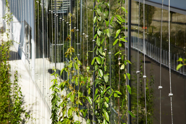 Fassadenbegrünung Pflanzen Kletterhilfe
