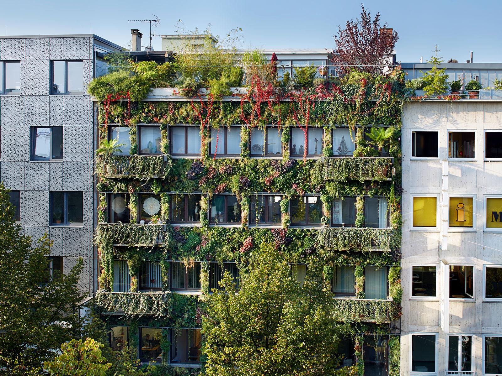Fassadenbegrünung in der Stadt positive und negative Seiten