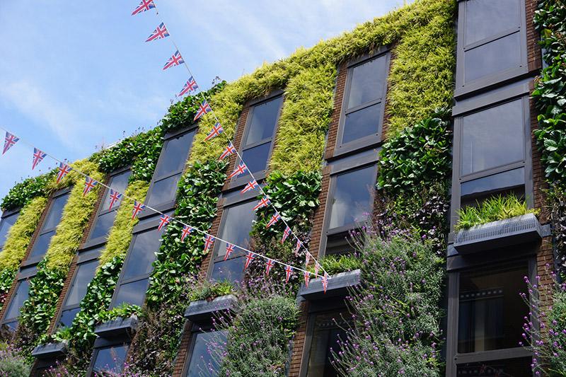 Fassade begrünen und pflegen Tipps